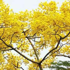 Đà Lạt : Nơi Duy Nhất ở Việt Nam Chào Hè với 5 Sắc Hoa Phượng !