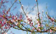 Giai Điệu Mùa Xuân