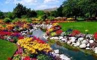 Những Cánh Hoa Trôi