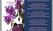 Hoa Bằng Lăng Tím Góc Trời